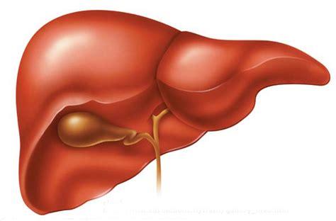 alimenti danneggiano il fegato fegato sano