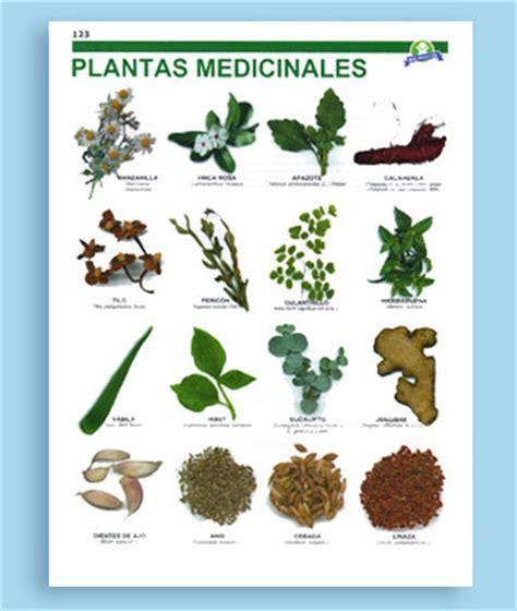 imagenes de flores medicinales plantas medicinales dibujos antiguos buscar con google