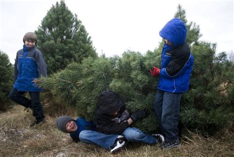 how to cut your own 5 christmas tree in michigan mlive com