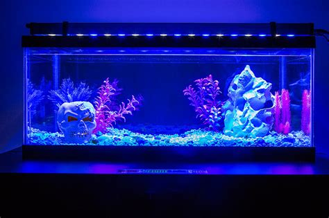Led Lights For Fish Tank by Led Aquarium And Fish Tank Lighting Family Room St