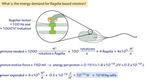 flagellar motor 187 what is the frequency of rotary molecular motors