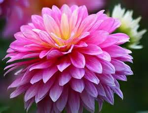 october flowers in bloom www imgarcade com online image arcade