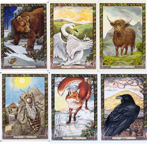 animal tarot cards a druid animal oracle set by p and s carr gomm angelic oracle cards oracle cards sets