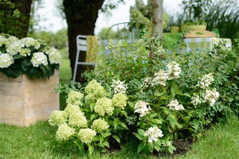 Garten Gestalten Hortensien by Die Hortensie Im Eleganten Garten Es Gr 252 Nt So Gr 252 N Wenn