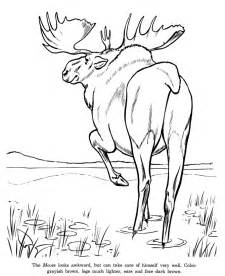 Animal drawings coloring pages wild moose animal identification