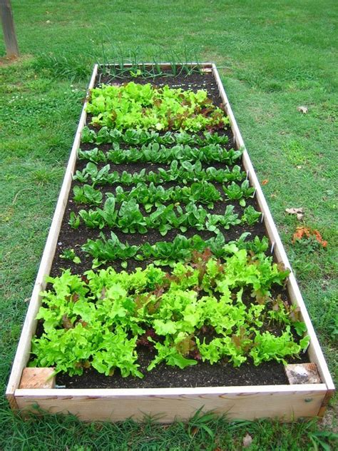 Diy Fruit Veggie Gardens Paramount Landscaping Blog Building Vegetable Garden