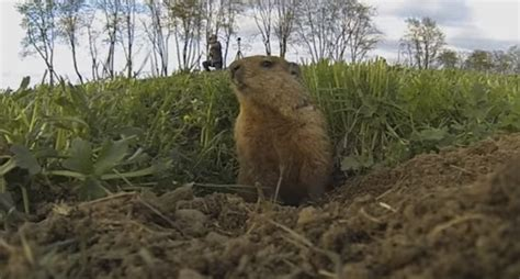 bowhunting groundhogs looks like a lot of