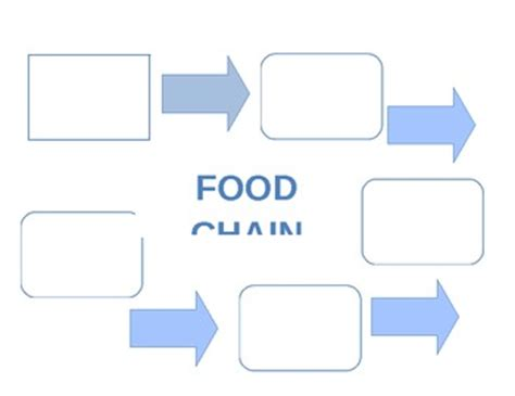 Food Chain Template Cards by Food Chain Graphic Organizer By Abercrombie