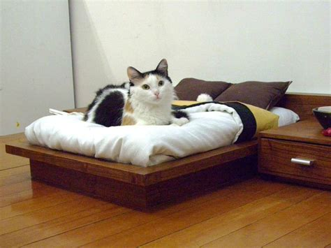 cat bedroom designer beds available for pets pictures fun news