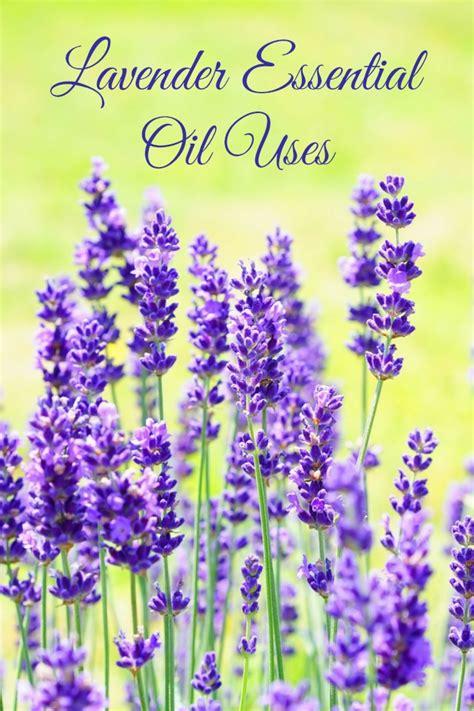 lavender essential oil uses experiencing parenthood
