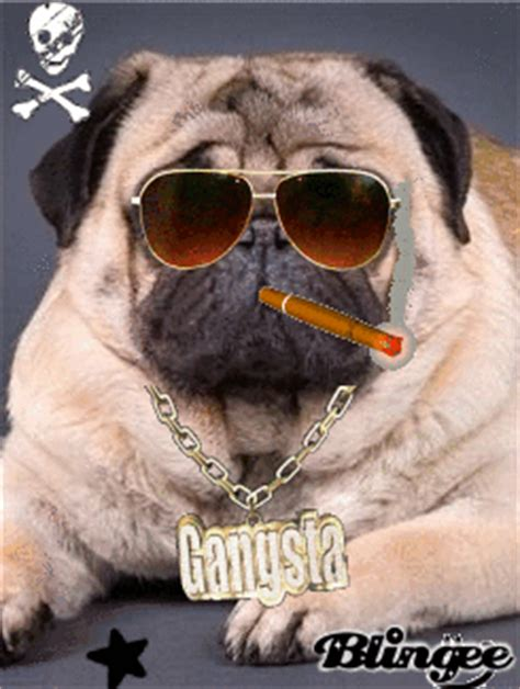 wow pugs cool pug picture 118844698 blingee