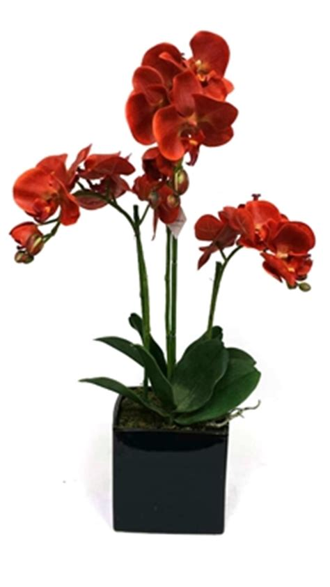 Lf Bunga Artifisial Tulip 1026 orange phalaenopsis orchid black ceramic pot