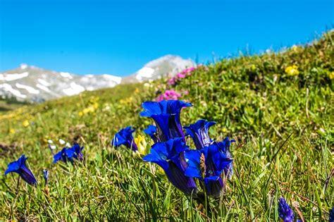 fiori di bach e menopausa gentian fiori di bach in menopausa menopausa