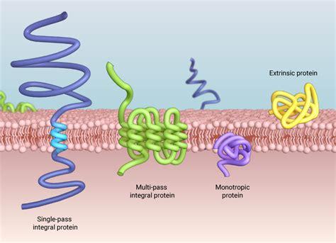 types  proteins     plasma membrane