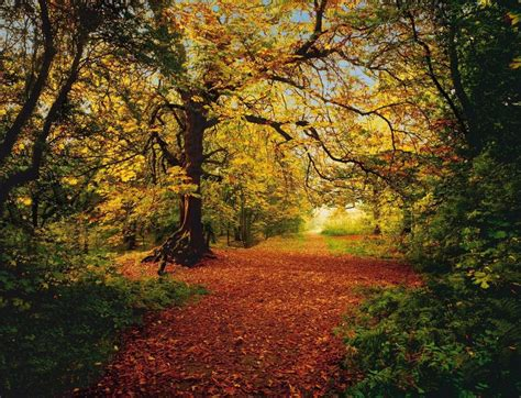 woods wall mural autumn forest photo wallpaper wall mural nature leafy path 388x270cm ebay