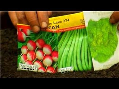 Step By Step Vegetable Garden Vegetable Gardening How To Plant A Vegetable Garden For