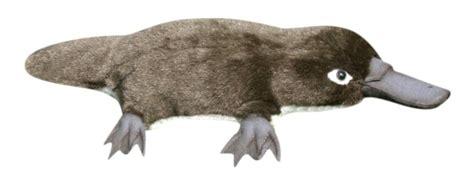 Anima   Peluche ornithorynque 40 cm Doudouplanet