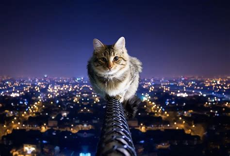 Wallpaper Cat Night | for the good night official blog of lara lamberti