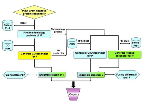 gram negative identification flowchart identification of gram negative bacteria flowchart