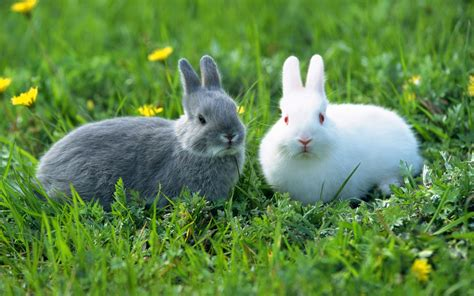 Rabbit L lovable images rabbits pictures beautiful