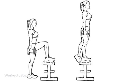 Exercises With A Bench Dumbbell Step Ups Workoutlabs