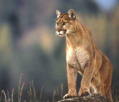 fotos animales zona sur de chile fauna zona sur y austral chile fauna de la zona austral