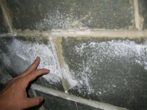 white mold on concrete wall what causes white mold on walls quora