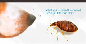 what you need to about bed bug detection dogs