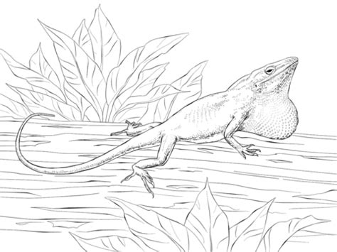 Anole Lizard Coloring Page | carolina anole coloring page free printable coloring pages