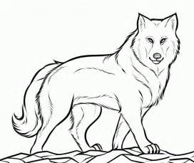 cool wolf coloring pages boys coloringstar