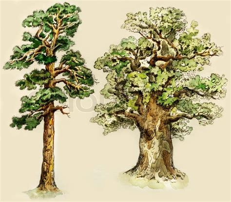 pine and oak trees painted in vintage manner isolated on buff background stock photo