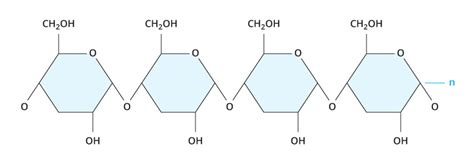 carbohydrates model carbohydrate molecule structure www pixshark