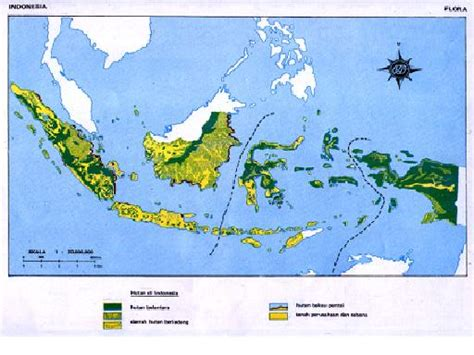 Puntius Tertra Zone Ikan Sumatera kondisi fisik wilayah indonesia bagaz zone