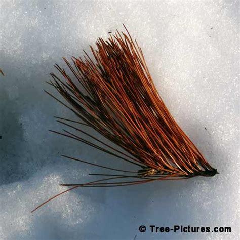 Buku Musim Dingin Di Rimba Besar 10 gambar pohon daun mengesankan musim dingin