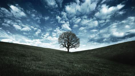asus wallpaper tree 고화질 배경화면 배경화면 갤러리 시티 시티