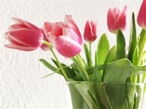how to care for tulips gardening advice new england today