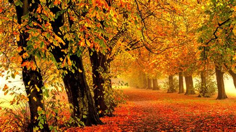 wallpaper 4k autumn wallpaper autumn park forest leaves 4k nature 588