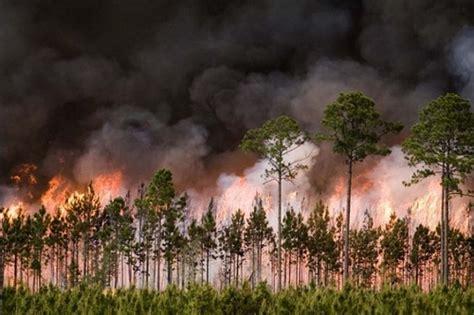 florida wildfires fla comm adam putnam warns of extreme wildfire danger