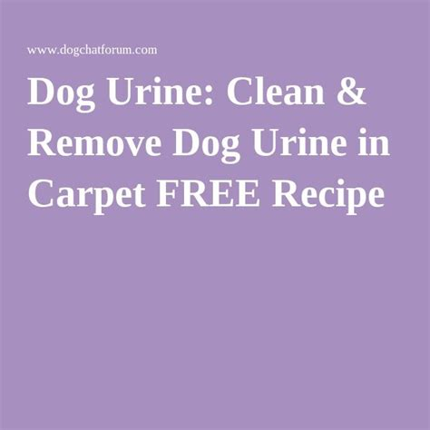 Remove Urine From by 1000 Ideas About Urine Remover On Urine
