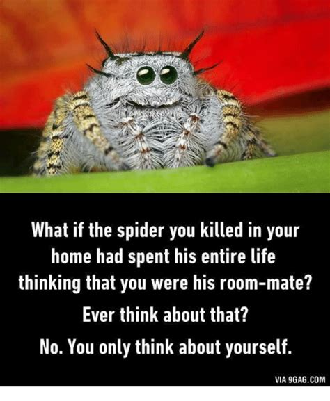 Spider In House Meme - what if the spider you killed in your home had spent his