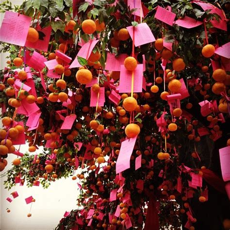 new year wishing tree tradition 71 curated new year ideas by johncotterill1