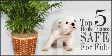 safe house plants for dogs top 5 houseplants for fido safe for pets