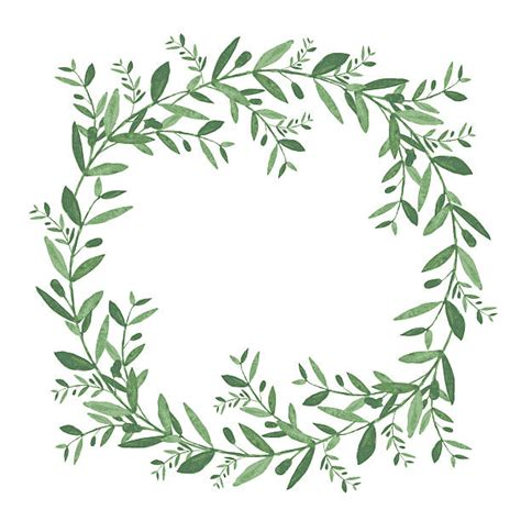 bayleaf kranz royalty free floral wreath watercolor clip vector