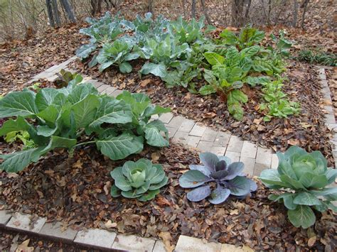 An Eco Friendly Guide To Disposing Of Autumn Leaves Leaf Mulch For Vegetable Garden