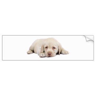 sad golden retriever sad golden retriever gifts t shirts posters other gift ideas zazzle