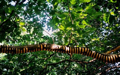 tree photography tree photography