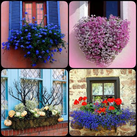 window flower box designs 8 beautiful window box planter ideas