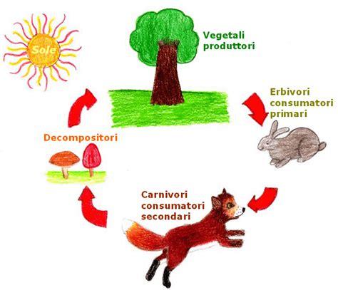 esempio di catena alimentare la catena alimentare