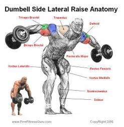 Hyperextension Bench Workouts Freefitnessguru Dumbell Side Lateral Raise Anatomy