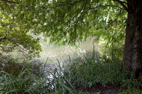 cypress tree and grasses near a pond at the kanapaha